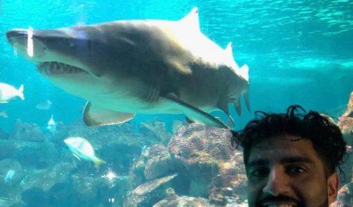 Gurdeep Shark Swim